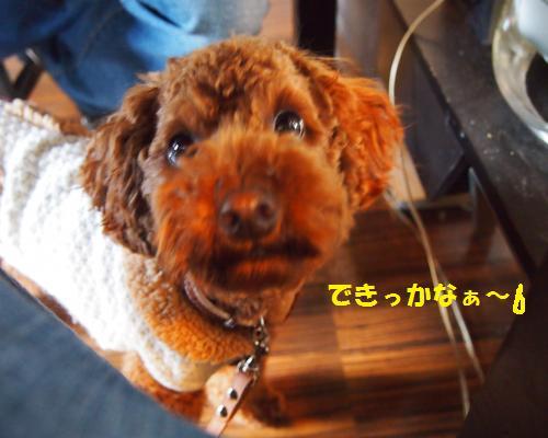 008_convert_20130126225048.jpg