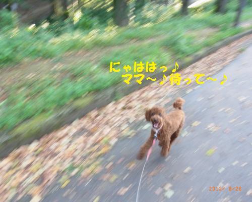 009_convert_20120827003644.jpg