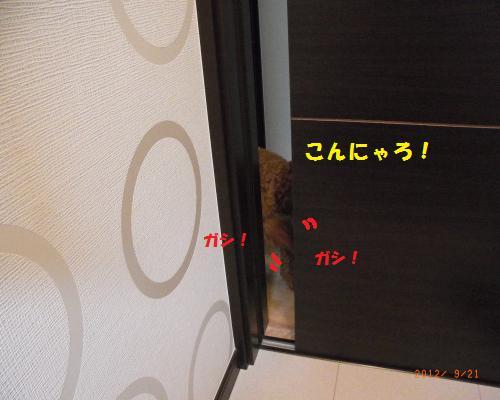 009_convert_20120923124627.jpg