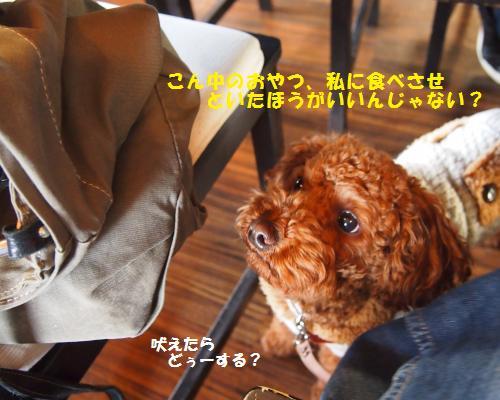 009_convert_20130126225139.jpg