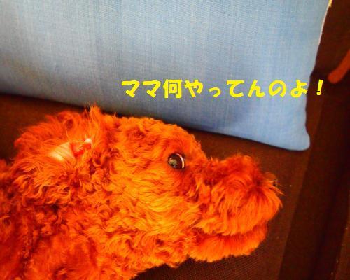 010_convert_20121121015014.jpg