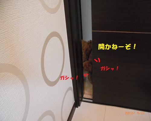 011_convert_20120923124719.jpg