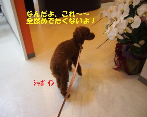 011_convert_20121102225624.jpg
