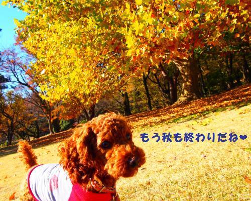 011_convert_20121130015534.jpg