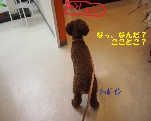 012_convert_20121102225703.jpg