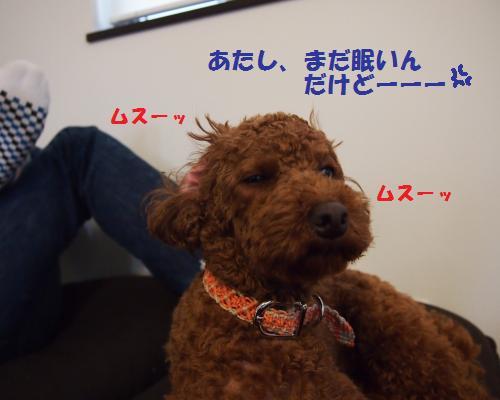 012_convert_20121124194731.jpg