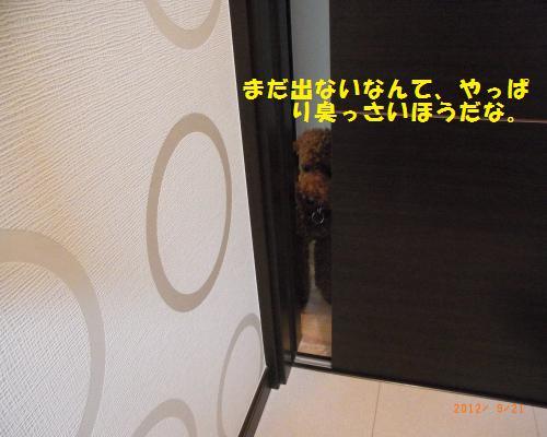 013_convert_20120923124756.jpg