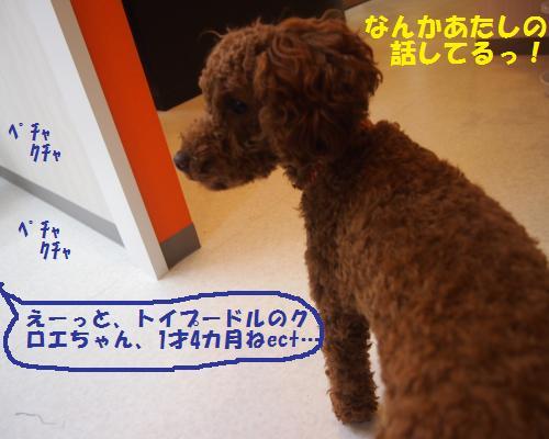 013_convert_20121102230119.jpg