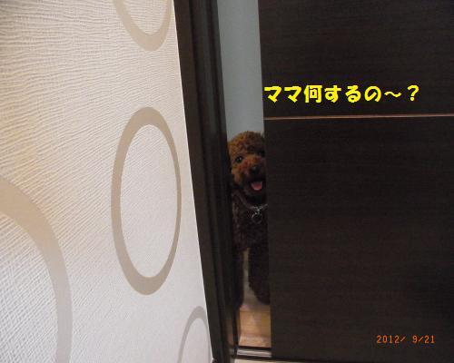 014_convert_20120923124419.jpg