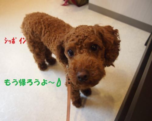 015_convert_20121102225744.jpg