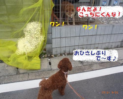018_convert_20120922184124.jpg