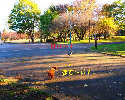 018_convert_20121118214906.jpg