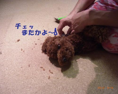 019_convert_20120919230347.jpg