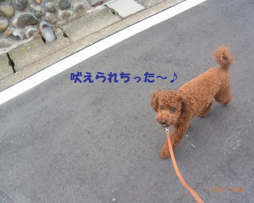 019_convert_20120922184248.jpg