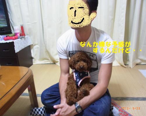 019_convert_20120928011404.jpg