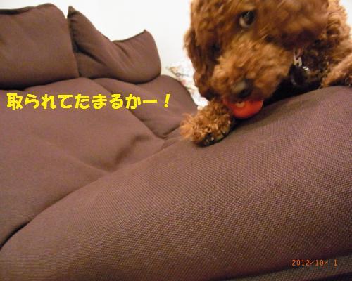 020_convert_20121004014345.jpg
