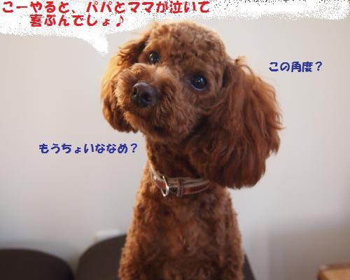 021_convert_20121209115334.jpg