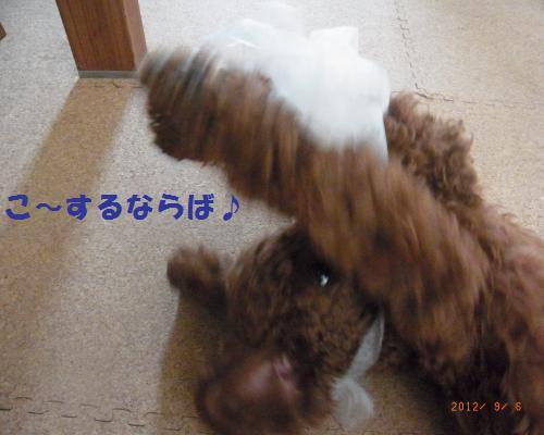 022_convert_20120908092645.jpg