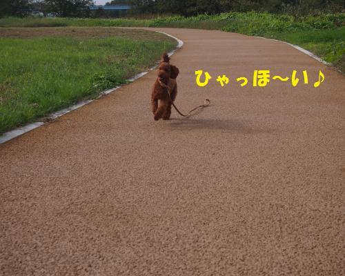 022_convert_20121104090005.jpg