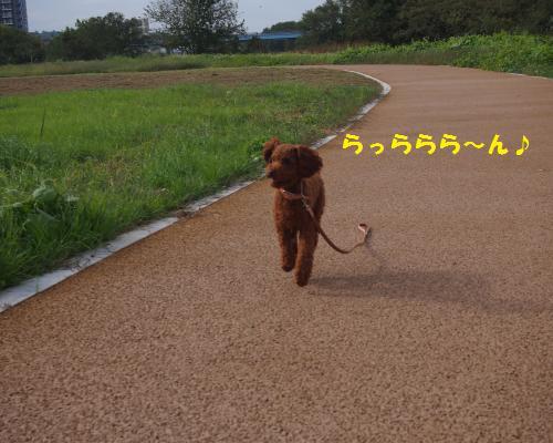 023_convert_20121104090151.jpg