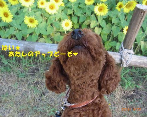024_convert_20120827004019.jpg