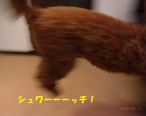 024_convert_20121004011652.jpg