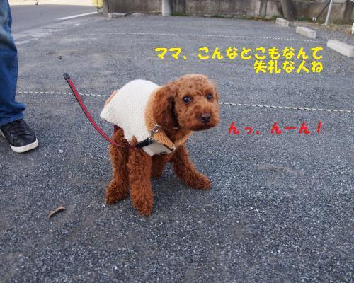 024_convert_20130120235139.jpg