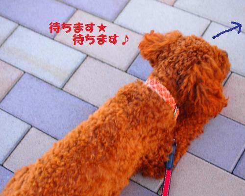 025_convert_20121117101425.jpg