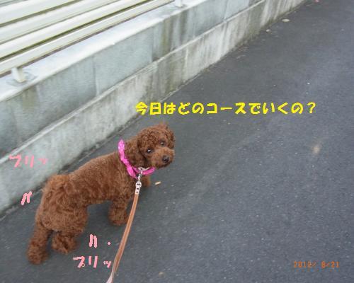 026_convert_20120824220651.jpg