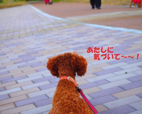 026_convert_20121117101526.jpg