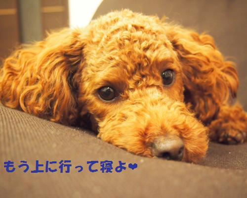 026_convert_20121128004041.jpg