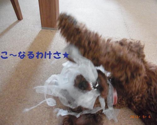027_convert_20120908093122.jpg