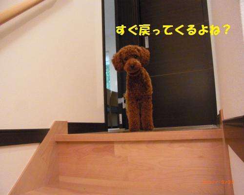 028_convert_20120923124004.jpg