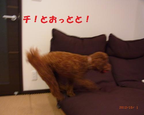 028_convert_20121004013717.jpg