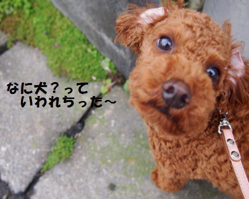 028_convert_20121127020819.jpg