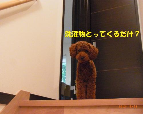 032_convert_20120923124120.jpg