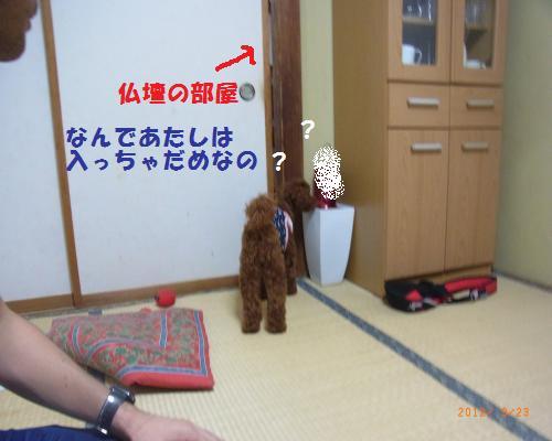 032_convert_20120928012212.jpg