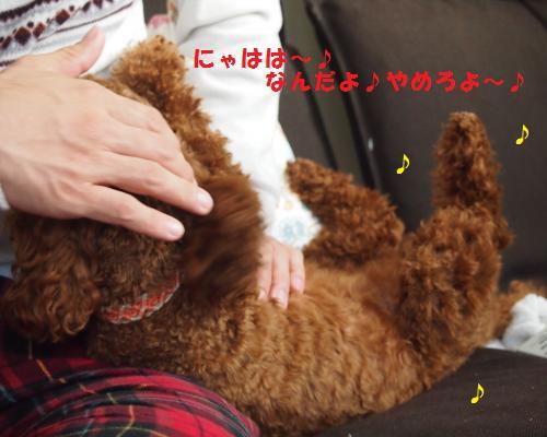 032_convert_20121129020953.jpg