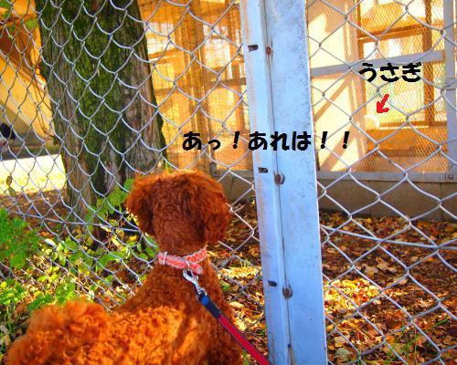 033_convert_20121118215327.jpg
