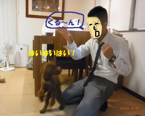 036_convert_20120830222850.jpg