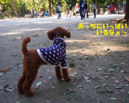 036_convert_20121106214658.jpg