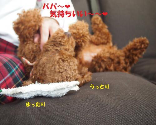 036_convert_20121129021204.jpg