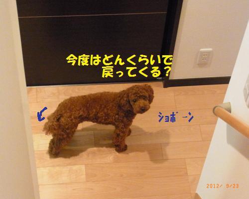 037_convert_20120923124254.jpg