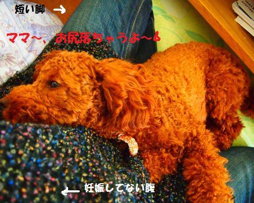 037_convert_20121125212708.jpg