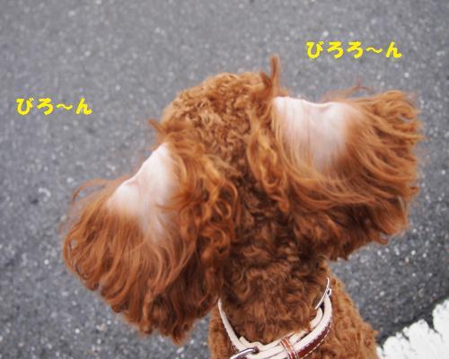 037_convert_20121127021008.jpg