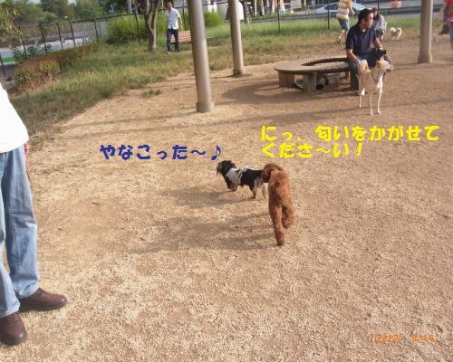 039_convert_20120917132035.jpg