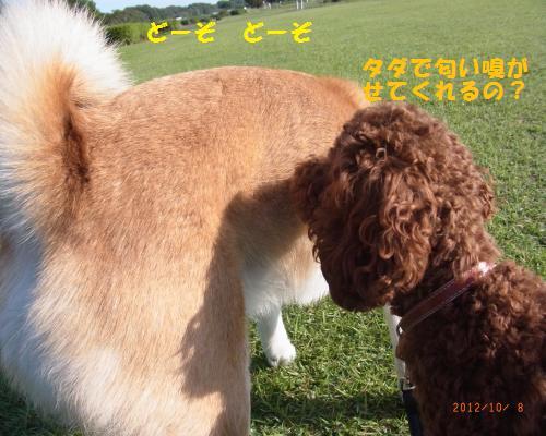 039_convert_20121009234044.jpg