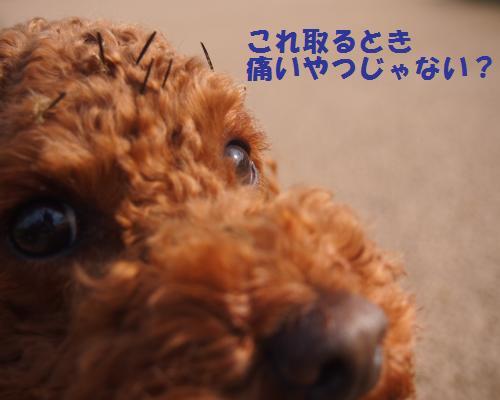 039_convert_20121104091845.jpg