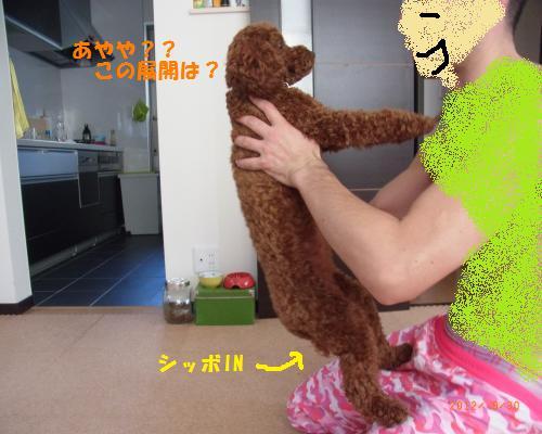 041_convert_20120930212941.jpg