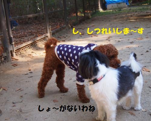 042_convert_20121106212406.jpg